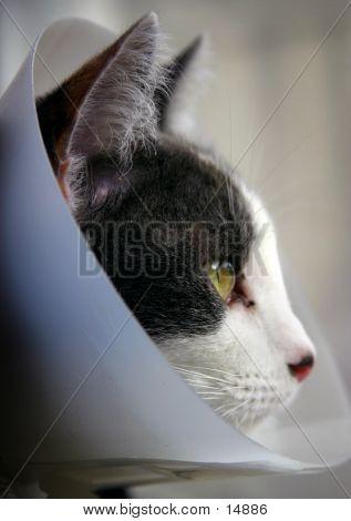 Recuperating Kitty