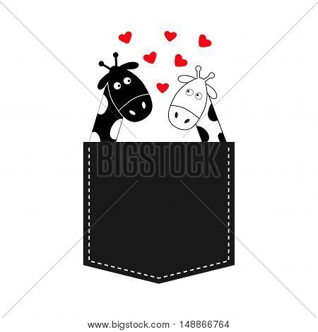 Cute cartoon black white giraffe in the pocket Boy girl with little hearts. Camelopard couple on date. Long neck. Funny character set. Happy family. Love greeting card Flat design Isolated. Vector