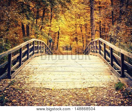 Wooden bridge in the autumn forest