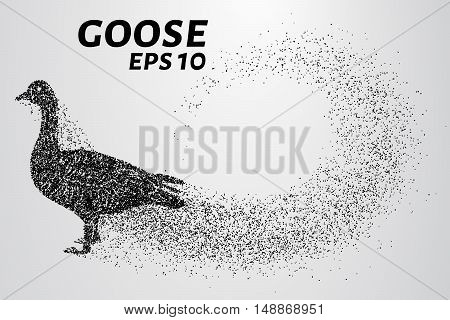 Goose of the particles. Goose consists of small circles.