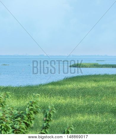 scenic view of sea with marsh grass at a sunny day