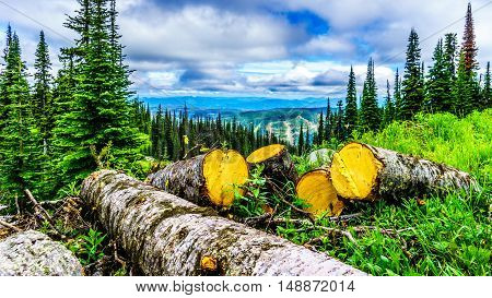 Logging of coniferous trees in the Shuswap Highlands of British Columbia, Canada