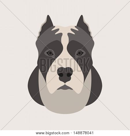 american staffordshire terrier head face vector illustration style Flat