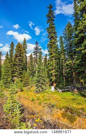 The swampy valley. Autumn in the Rocky Mountains of Canada. The concept of active tourism and eco-tourism