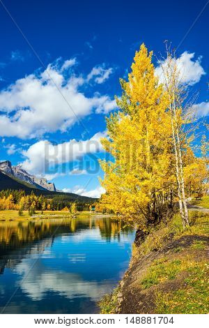 The concept of hiking. The path and yellowing aspens surround the lake. Canmore, near Banff National Park