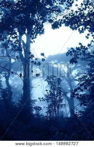 Mysterious landscape with trees and bushes in foggy forest. Photo toned in blue color