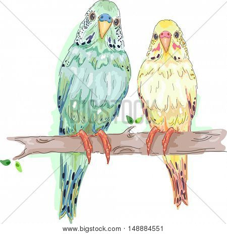 Animal Illustration Featuring a Pair of Parakeets Perched Side by Side on a Tree Branch