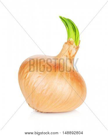 Fresh ripe onion. Isolated on white background