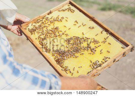 Man holding frame with honeycomb