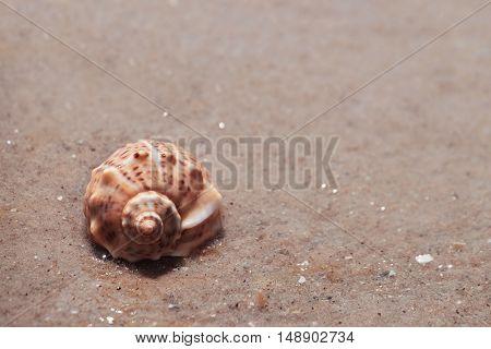Beautiful seashell on wet sand shore