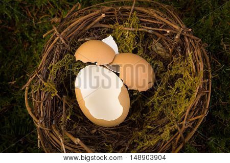 Empty eggs in a bird's nest to be used as a digital backdrop for newborn photography.