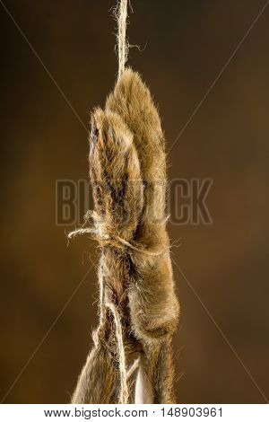 Paws of a dead hare hanging on a rope in an old master hunting still life