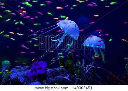 Multi-colored small fish and jellyfish on the sea bottom.