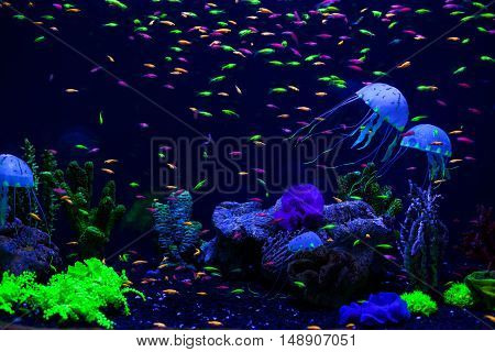 Jellyfish corals and fish on the ocean floor.