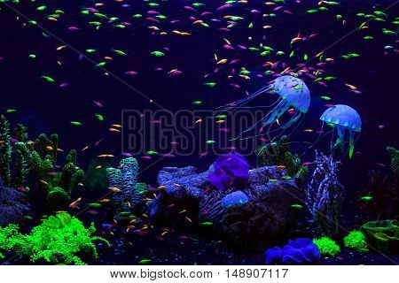 Fish and jellyfish in an aquarium at the bottom among corals.