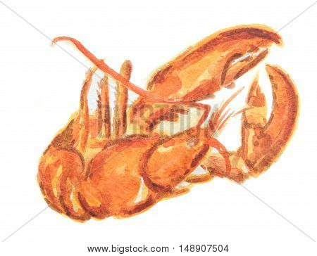Isolated watercolor red lobster on white background. Delicious and healthy seafood. Restaurant menu.