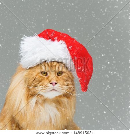 Big ginger maine coon cat in christmas santa cap over snow background. Copy space. Square composition.