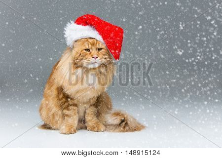 Big ginger maine coon cat in christmas santa cap sitting over snow background. Copy space.