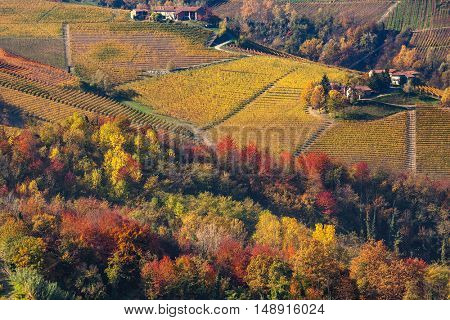 Colorful trees and hills with vineyards in autumn in Piedmont, Northern Italy.