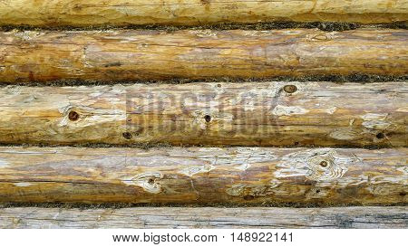 wood board texture background. wooden wall design