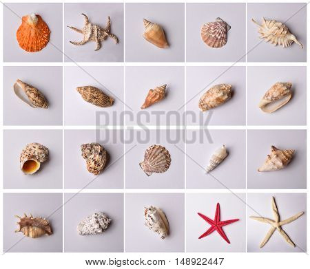 Group of sea shells isolated on pattern and gray background. Top view