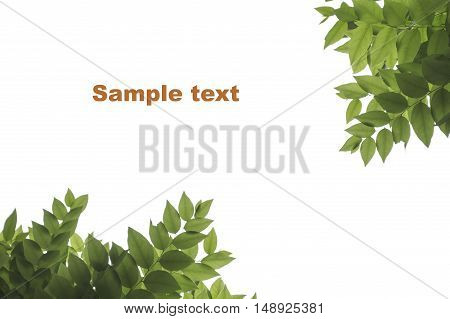 leaves in the white background.with sample text.