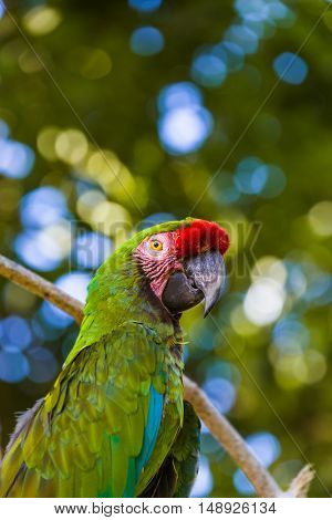 Parrot in Bali Island Indonesia - nature background