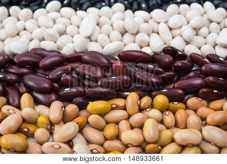 Mixture of different type of colorful beans
