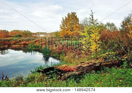 Forest autumn landscape in vintage colors - small river overgrown with reeds in cloudy weather. Autumn cloudy landscape of autumn nature with yellowed autumn trees along the forest autumn river