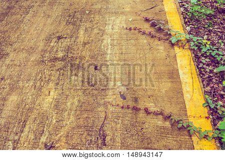 Vintage Tone Image Of Plant Leaf On Road .