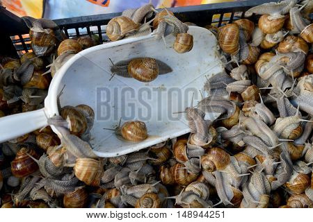 Edible snails sale in market. Animals in black box. White plastic scoop in foreground.