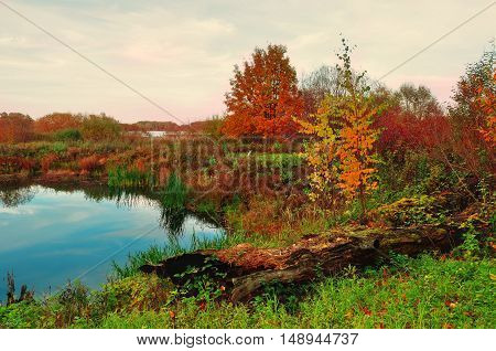 Mysterious autumn landscape in soft vintage colors - blue river overgrown with reeds in cloudy weather.Autumn cloudy landscape of autumn nature with yellowed autumn trees along the forest autumn river