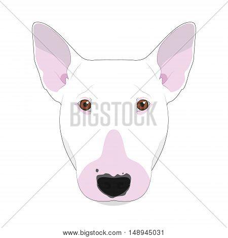Bull Terrier Dog Isolated On White Background Vector Illustration