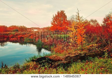 Autumn cloudy forest and blue autumn river in foggy weather -landscape view. Autumn vintage landscape view. Autumn foggy landscape of autumn nature with yellowed autumn trees near forest autumn river