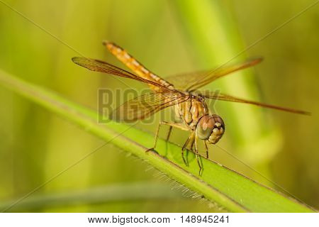 Dragonfly with blur beautiful nature background outdoor