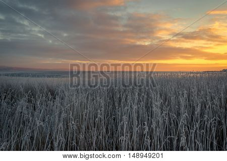 Grass With Frost Near The Sea