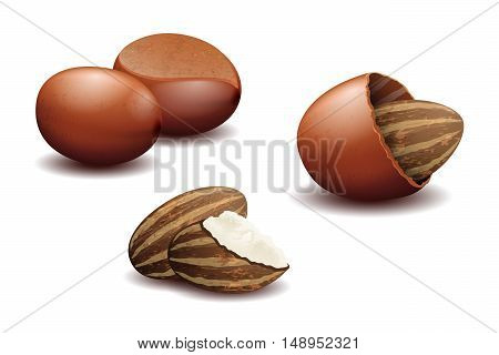 Shea nuts and shea nut butter. Organic natural useful seed, vector illustration