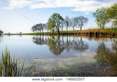 Natural pond with perfect tree reflections in the mirror smooth water surface of a small lake in the Netherlands.