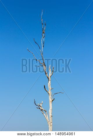 dry tree dead sky at drought cracked landscape background