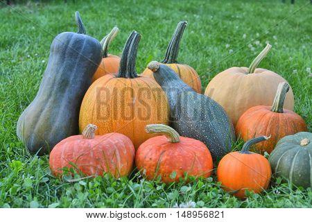Pumpkins And Squashes