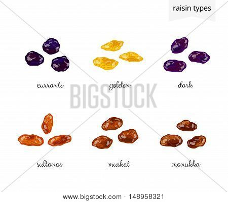 Collection of different cartoon raisin varieties isolated on white background with names.
