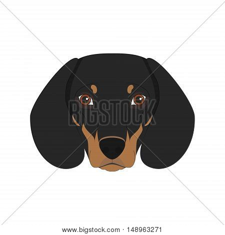 Dachshund Dog Isolated On White Background Vector Illustration