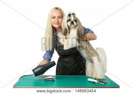 Beautiful smiling woman groomer with hair drier and cute shih-tzu dog - isolated on white