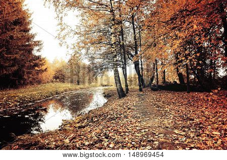 Autumn trees and narrow forest river in cloudy weather. Autumn picturesque landscape in pale colors. Autumn forest landscape-orange autumn trees and dry fallen autumn leaves. Vintage autumn landscape