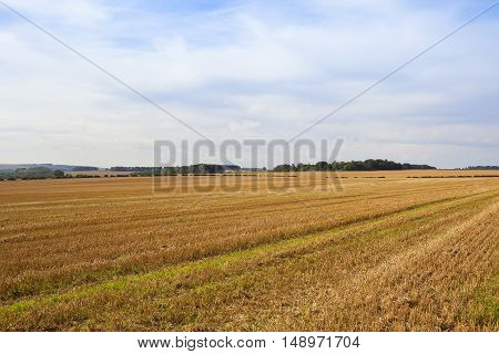 Late Harvest Landscape