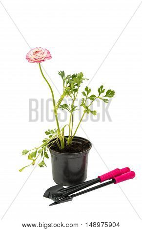 pot with garden tools on a white background