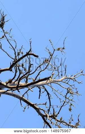 Branches of deadwood with clear blue sky.