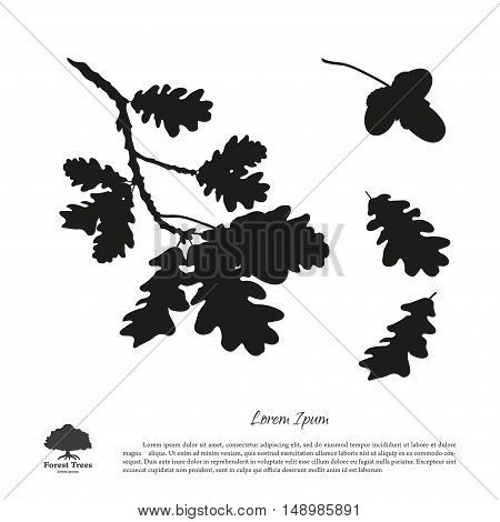 Black silhouette of the oak branch on a white background. Oak leaves and acorns. Vector illustration