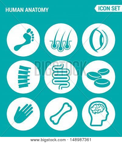 Vector set web icons. Human anatomy leg hair eye foot Ridge intestine blood hand bone brain. Design of signs symbols on a turquoise background