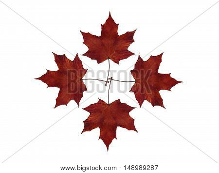 Autumn maple leaves nature background textures pattern foliage